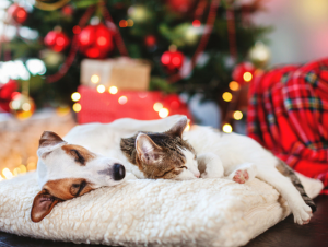 Pet Proofing Your Christmas Tree
